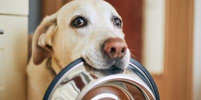 Le 7 regole dell'alimentazione del cane