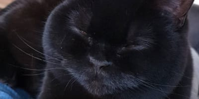 Black cat takes everyone's breath away when she opens her eyes