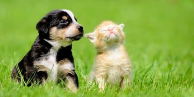 Drei kniffelige Quiz-Fragen für alle Freunde von Hunden und Kätzchen