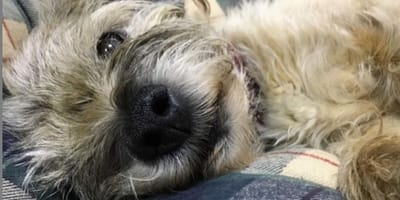 Update: Supervet's pup is showing signs of recovery following accident