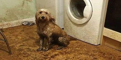 Pies w brudnej kuchni