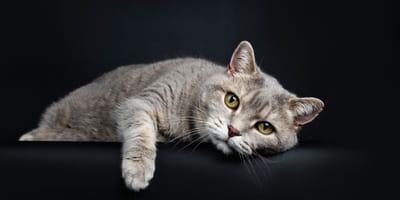 Alles Wissenswerte zur Lebenserwartung von Katzen