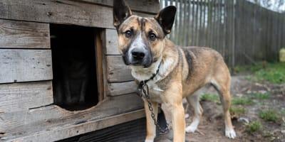 Piątka dla zwierząt - domaga się jej ponad połowa Polaków! Co zawiera nowelizacja ustawy?