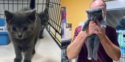 Kitten who won't stop meowing at shelter worker finally gets what he wanted