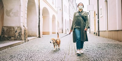 woman walking her beagle in street