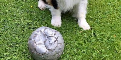 nuevo perro del atletico san luis futbol pirata