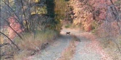 Kleines Tier auf Waldweg