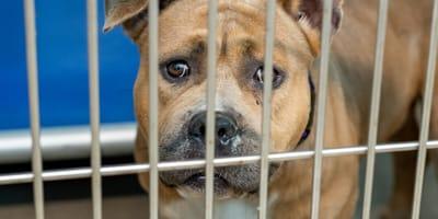 perro encarcelado oaxaca