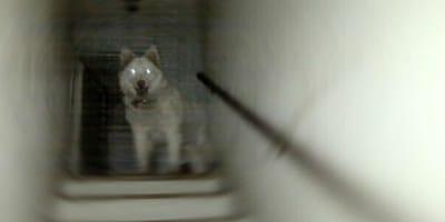 aparicion perro fantasmal