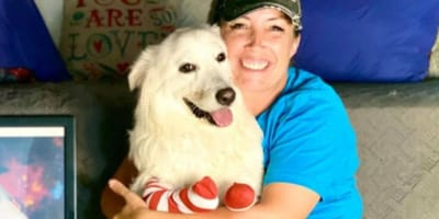 Dog born with no legs thought she'd never be able to run. Then this happened!