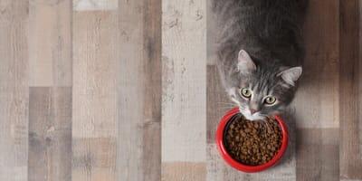 Antes de comprar un alimento orgánico para gatos deberías leer esto