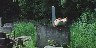Kot na cmentarzu