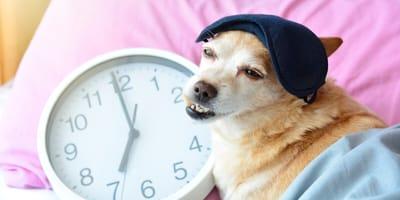 perro en la cama cambio de horario México 2021