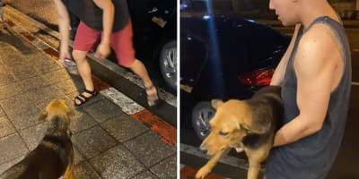 Pogoń za psem na ulicach Bangkoku