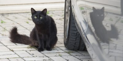The danger of antifreeze on pets