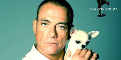 Jean Claude van Dame z psem chihuahua