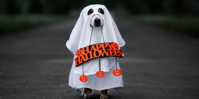 cane travestito da fantasma con nome spaventoso