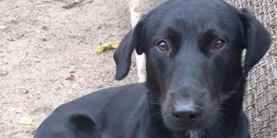 Po ośmiu miesiącach rodzina zwraca psa do schroniska. Ale wtedy dzieje sie coś niewiarygodnego