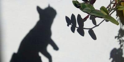Schatten von Katze an Hauswand
