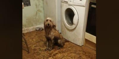 cane in cucina piena di fango