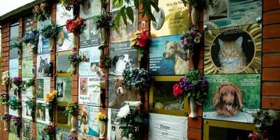 crematorio animales quinatana roo