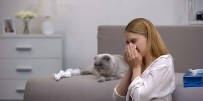 ragazza sul divano con sintomi dell'allergia al gatto vicino a scottish fold grigio