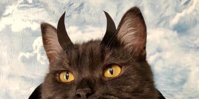gatto-con-corna-di-vampiro