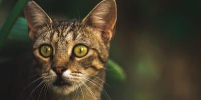 gatto sorpreso con sfondo naturale