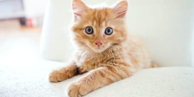 20 Namen für Katzen und Kater mit rotem Fell