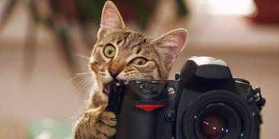 Dziwne zachowanie kota? Rozwiązanie problemu może leżeć w jego misce!