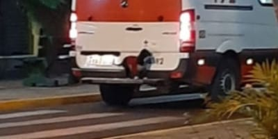 Dog sitting on back of ambulance