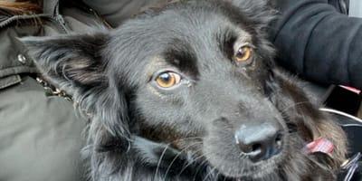 Famiglia-e-cane-nero