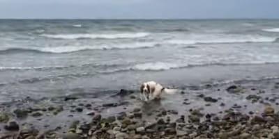 cane in acqua vicino a focena