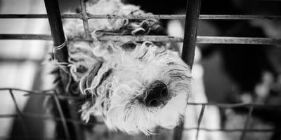 Cámara capta a veterinaria dentro de una jaula de perro: la razón te deja sin aliento