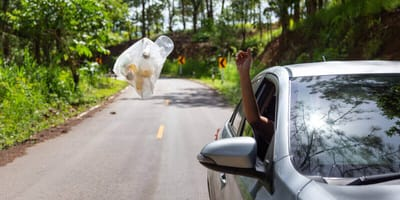 arrojan gato coche como basura
