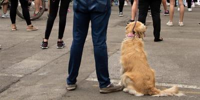 Pies na proteście.