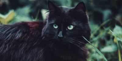 18 Namen für Katzen und Kater mit schwarzem Fell