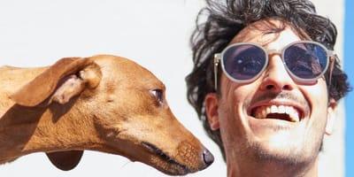 Pies patrzy na człowieka