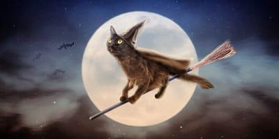 nombres para gato bruja