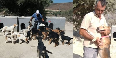George Orfanidis with rescue dogs