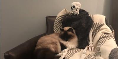 Jak zareagowałby kot, gdybyś nagle umarł w domu? Ta kobieta już to wie