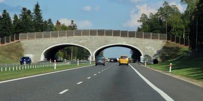 Kocięta na autostradzie koło Tarnowa.