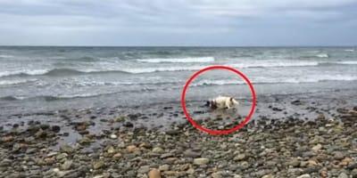 Weißer Hund im Meer