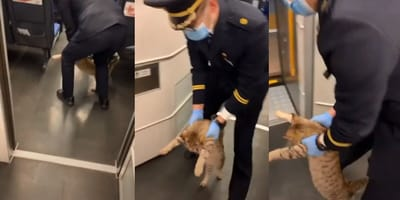Montage of the removal of a stray cat from Chinese train