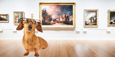 ¡Museo para perros! La exposición en CDMX que tu lomito no se debe perder