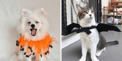 perro y gato disfrazados de halloween