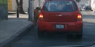 Sin rendirse, perrito persigue en Azcapotzalco al coche que lo acaba de abandonar