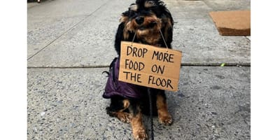 <p>Upuszczaj więcej jedzenia na ziemię</p>