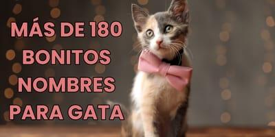 Más de 180 nombres para gatas bonitos y originales