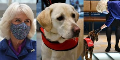 Duchess of  Cornwall meets dogs